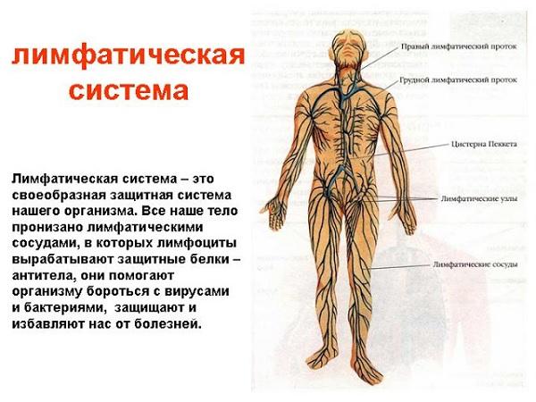 Sistema2