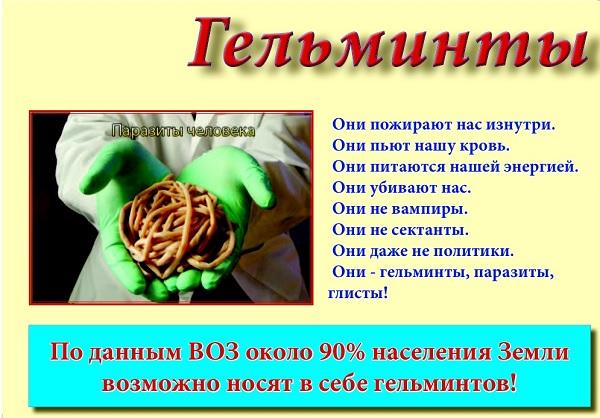 плоские черви в организме человека фото