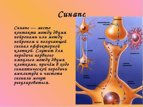 Дибазол для укрепления иммунитета