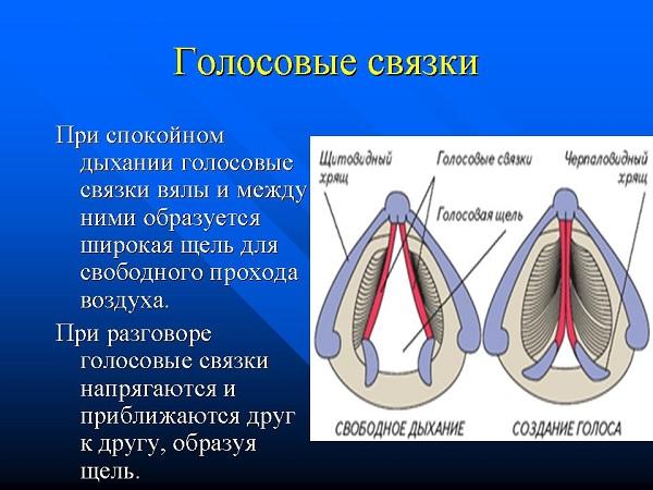 Svyazky2