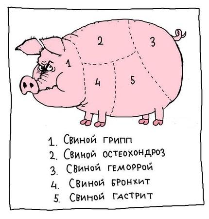 Виды свиных болезней