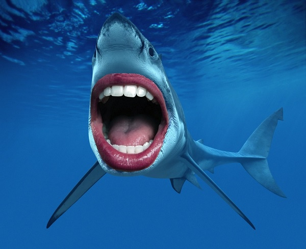 Зубы акульи