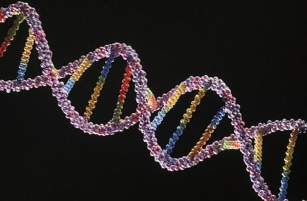 Модель цепочки ДНК