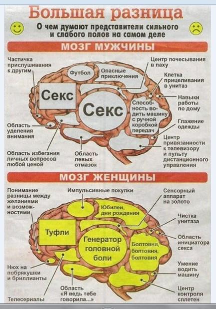 Мозги мужчины и женщины