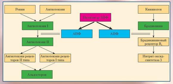 Ингибиторы АПФ от стенокардии