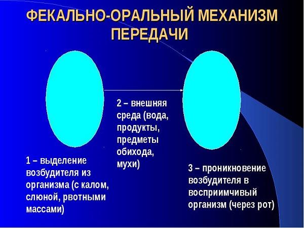 Механизм передачи болезни