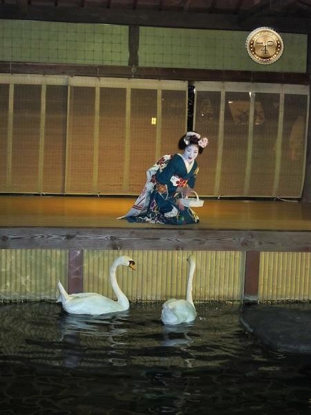 Кормление двух лебедей