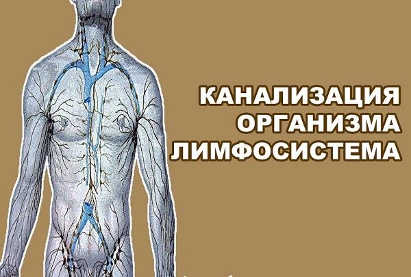 Канализация организма лимфосистема