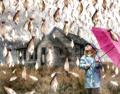 Клев во время дождя