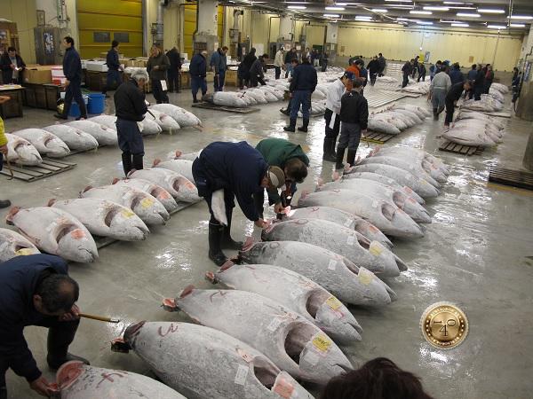 Покупатели рыб на аукционе