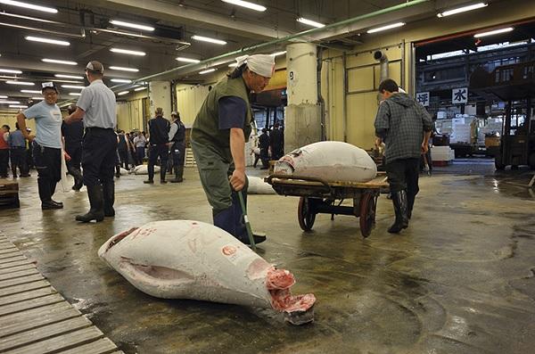 Перевозка рыбьих туш