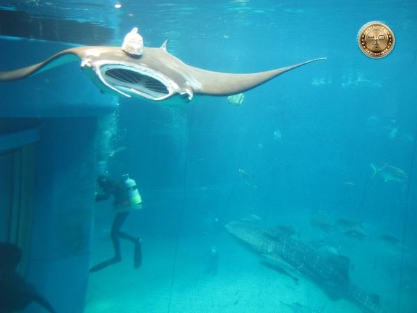Аквалангист со скатом и акулой