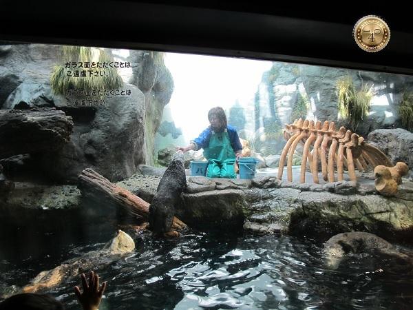 Кормление японского бобра