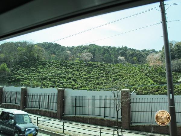 Марсианская растительность в Японии