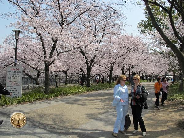 Разговор под сенью цветущей сакуры