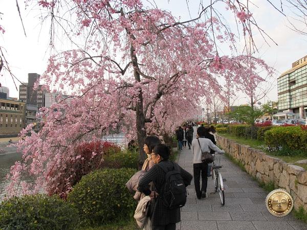 Набережная реки Камо в Киото