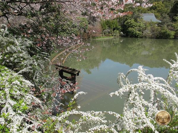 Торий на озере