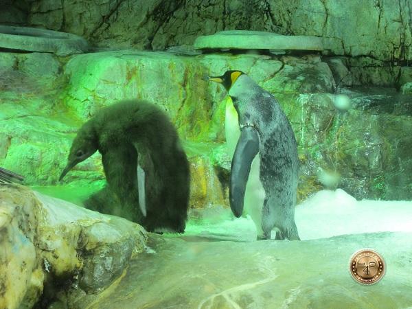Пингвины на прогулке