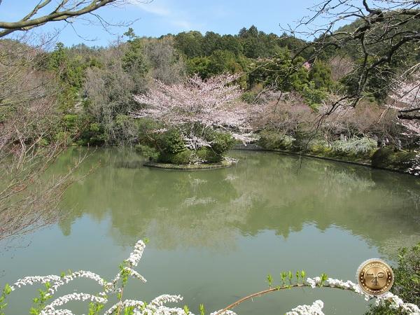 Сакура на озере