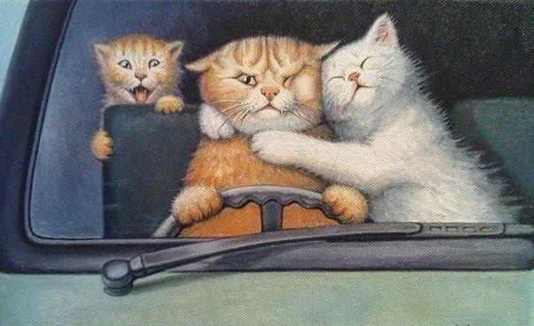 Кошачья семья в автомобиле