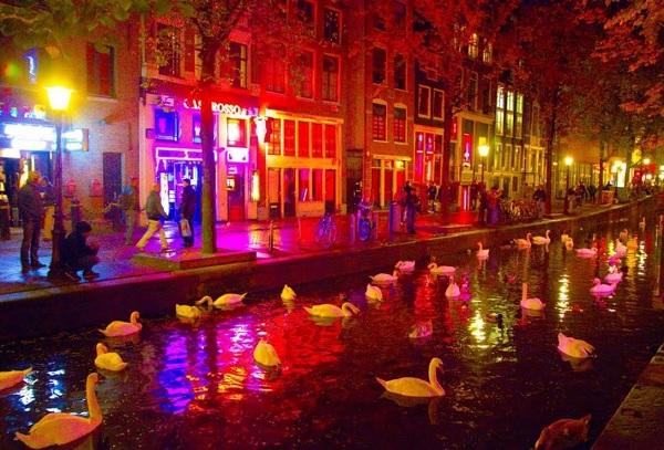 Лебеди на канале в Амстердаме