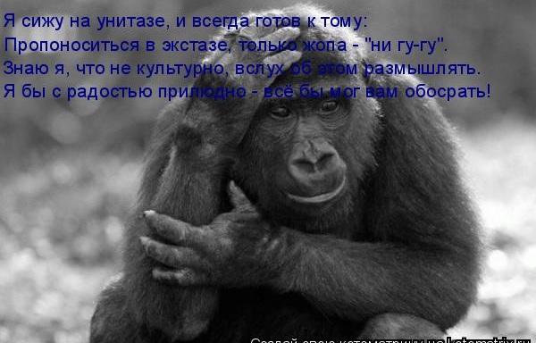 Запор у обезьяны