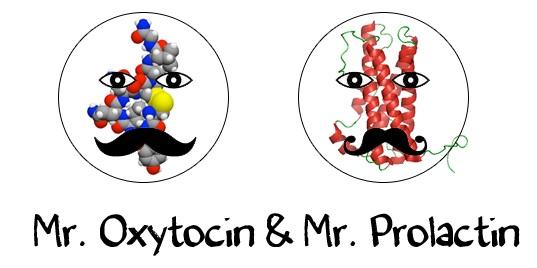 Пролактин и окситоцин у женщин