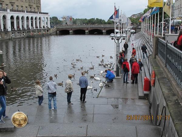 Лебеди у набережной Гамбурга