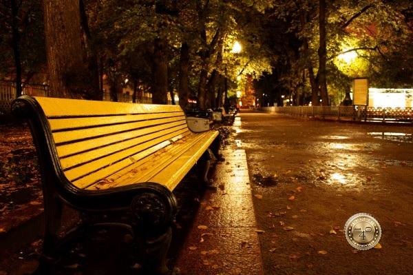 скамейка на Патриарших прудах