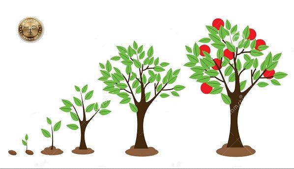 Из семечки вырастает дерево