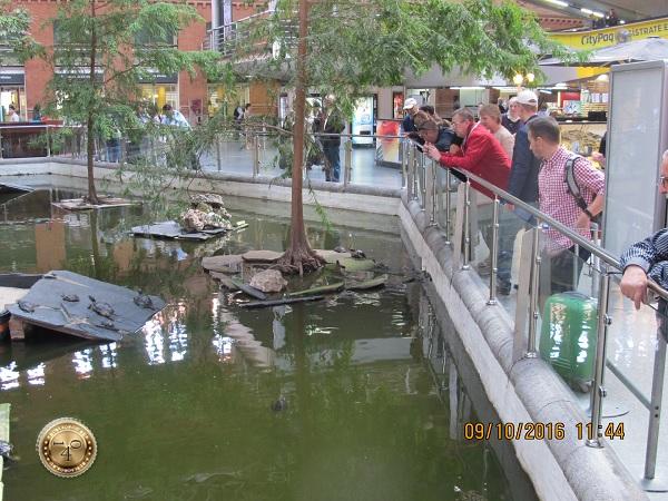 Черепахи на вокзале Аточа