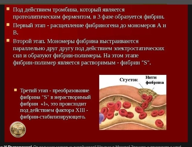 образование фибрина