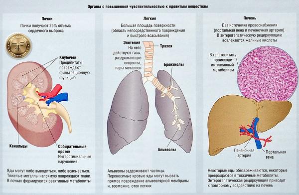 чувствительные органы