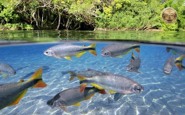 Рыба в пресной воде