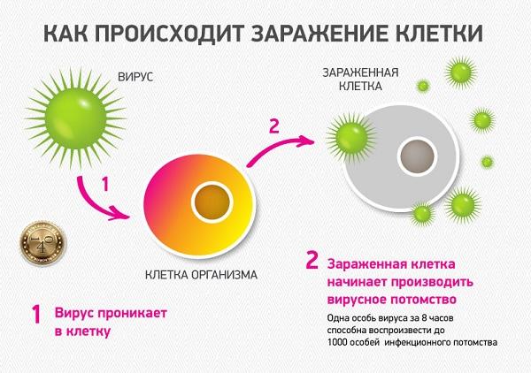 заражение клетки вирусом