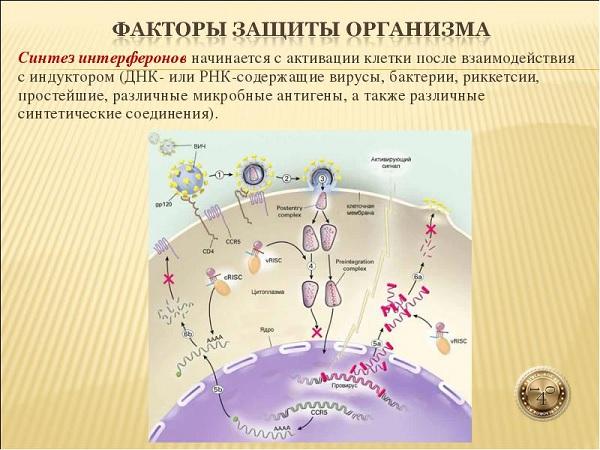 факторы защиты организма