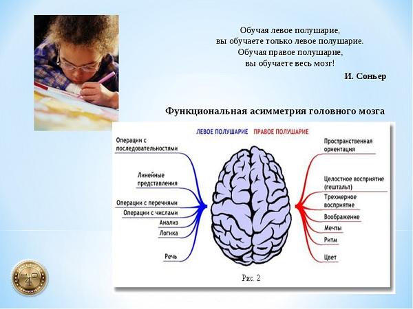 ссвойства полушарий мозга
