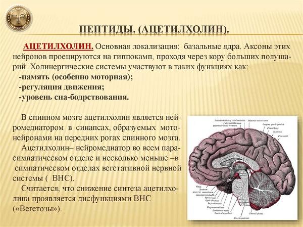 ацетинхолин
