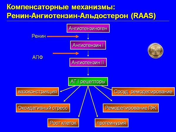 ангиотензин 1 и 2