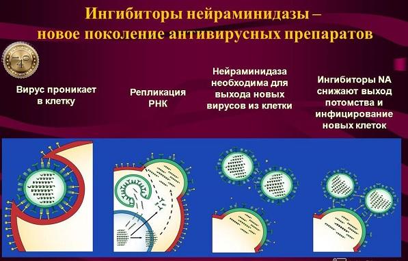нейраминидазы