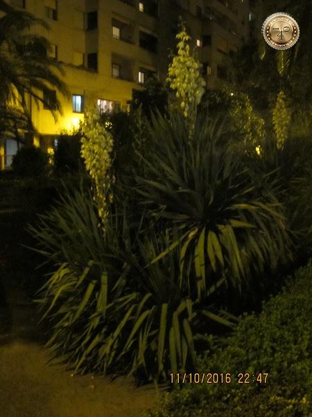 """дерево у гостиницы """"Pasarela"""" в Севилье"""