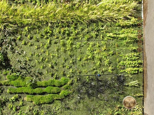 трава на доме