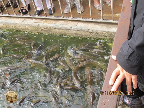 красные рыбки в Алькасаре