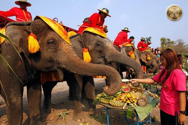 Фестиваль слонов во Вьентьяне
